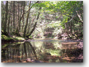 preserve clarks creek