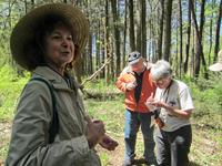 Jane Earle discovers wildflowers